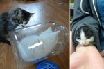 Watch Out! These 22 Chunky Kittens Are Up To No Good