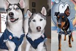 19 Dogs Crushing Style Goals With Ridiculously Sweet Denim Swag