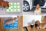 6 Genius Hacks To Make Life Easier For Senior Dogs