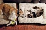 21 Of Your Sleepiest Pets