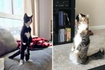 People Are Sharing Pictures Of Their Cats Standing Upright Like Humans & It's Too Damn LOL