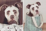 There's More To This Sorrowful-Looking Bulldog Than Meets The Eye(brows)
