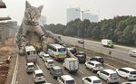 Giant Cats Overrun The World's Cities In Hilarious New Photoshops