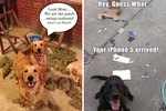 15 Dogs Who Are Very Proud Of The Mess They Made