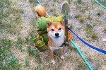 Just 23 Photos Of Happy Dogs Who Are So Excited To Go Camping With You
