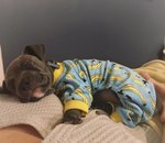 22 More Dogs In Pajamas Who Are Crushing Coziness Goals
