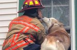 This Dog Kissed The Firefighter Who Rescued Him