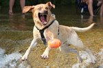 17 Photos Of Dogs Taken At Just The Right Moment