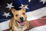 Help Best Friends Find Homes For 10,000 Shelter Pets By July Fourth