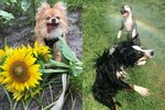 18 Photos That Prove Dogs Are The Purest Thing Ever