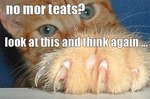 18 Memes That Prove Cats Make Their Own Damn Rules