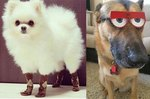 17 LOL-Worthy Animal Pics To Make You Chuckle