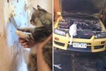 23 Cats With Very Important Jobs