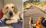 This Hero Puppy Did The Unthinkable When A Rattlesnake Crossed His Owner's Path