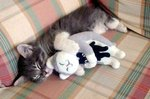 Just 25 Cats Snuggling With Their Favorite Stuffed Animals