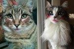 17 Cats All Tarted Up Wearing Makeup