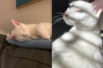 """Pet Owners Are Sharing Stories About Their """"Mean"""" Cats And We Can't Stop Laughing"""