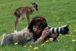 Animals Interrupting Wildlife Photographers Is Our New Favorite Thing [17 PHOTOS]