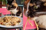 Pasta-Slurping Cat Breaks Internet With Intense Facial Expression