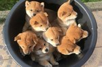 18 Adorable Animal GIFs You Don't Want to Miss