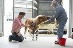Plastics Make It 'Pawssible': 14 Animals Living Their Best Lives Thanks to Prosthetics