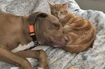16 Cats Who Have Fallen Madly in Love With the Dog