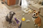 These Misbehaving Dogs Are Getting Roasted Online, and We Can't Stop LOLing