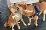 19 Ridiculous Shiba Inu Memes