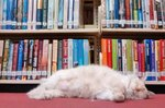 23 Library Cats Reading All the Books and Napping All the Naps