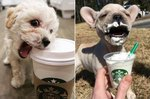 Here's What 21 Adorable Dogs and Cats Ordered at Starbucks