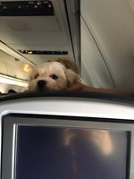 Just 24 Dogs On Planes