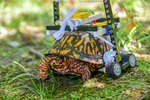 LEGO Wheelchair Puts Adorable Injured Turtle On The Road To Recovery