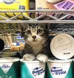 25 of the Cutest Bodega Cats To Ever Live