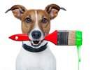 Save Big Bucks With These Doggie DIY Projects
