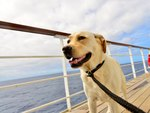 Are Dogs Allowed on Cruise Ships?