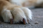 How to Care for a Dog that Lost a Toe Nail
