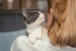 6 Ways To Help Homeless Cats When You Can't Adopt One