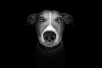 What To Do When A Dog Is Being Abused