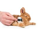 How to Perform CPR on a Rabbit