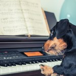 138 Musical Dog Names