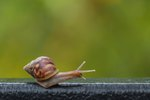 Snails Have Teeth & It's Freaking People Out