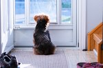 What Does It Mean When Your Dog Sits by the Door?