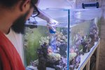 How to Create Good Bacteria in Fish Tanks