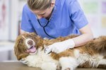 How Vets Check for Parvo in Dogs