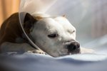 Neutering Your Male Dog & What to Expect