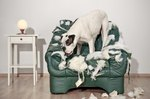 Bad Behaviors You're Unknowingly Causing in Your Dog