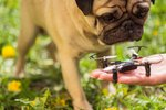 Would You Trust A Drone To Walk Your Dog?