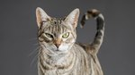 How Smart Are Cats? Here's What Science Cannot Tell Us