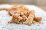 Cats Domesticated Themselves Because They Do What They Want