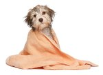 How to Bathe a Dog in Cold Weather